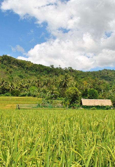 Découverte des campagnes philippines