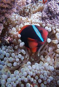 Plongée sous marine aux Philippines