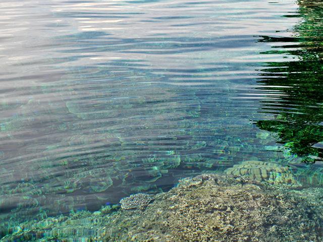 Fonds marins riches en coraux et biodiversité