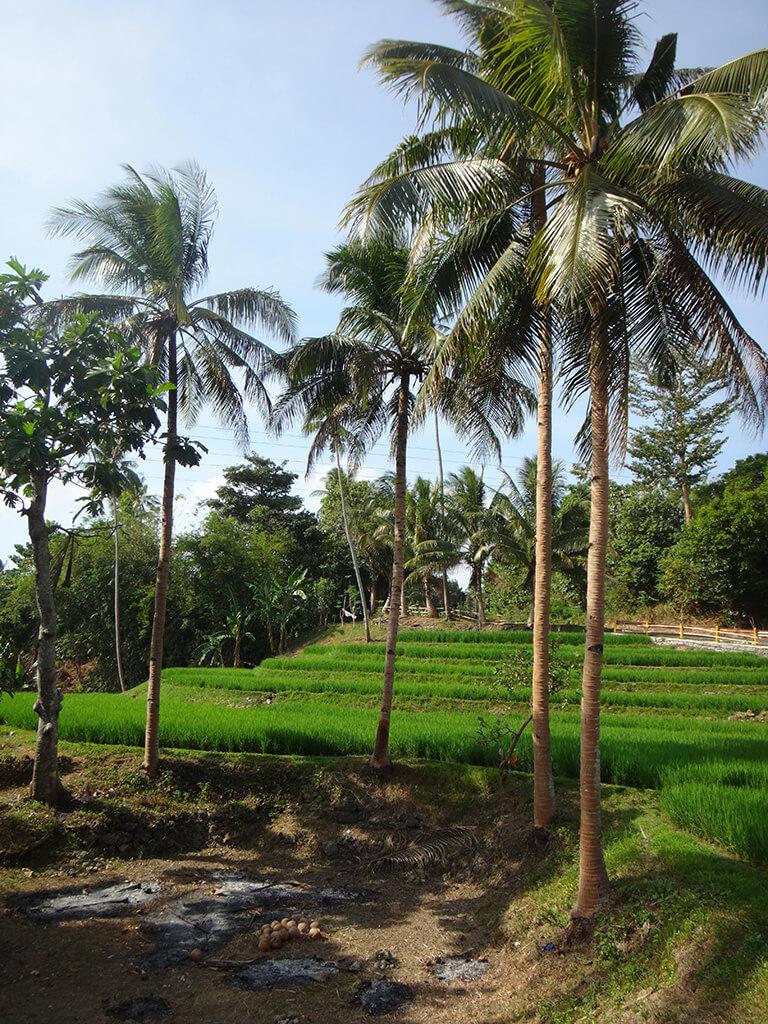 Vue sur la campagne Philippine