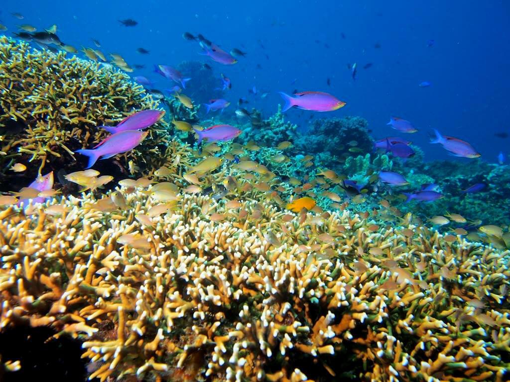 Fond sous marins aux Philippines