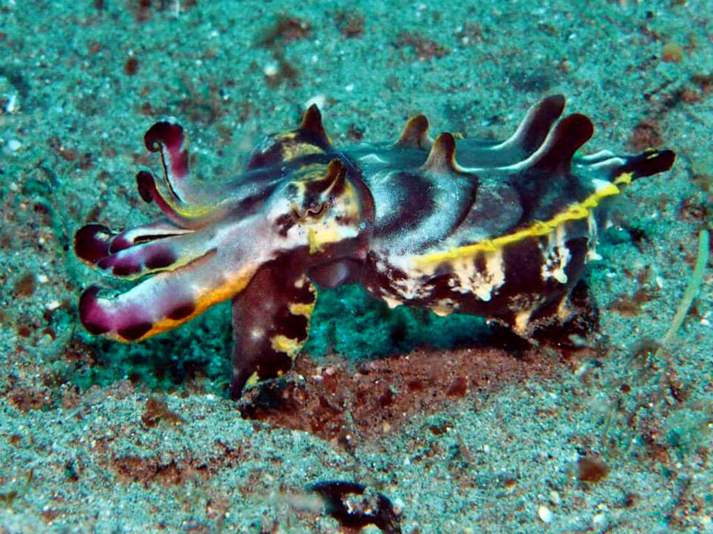 Faune sous marine aux Philippines