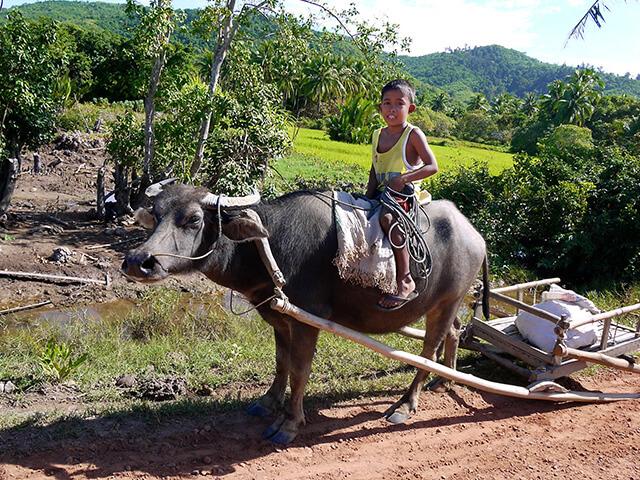 Enfant sur un buffle aux Philippines