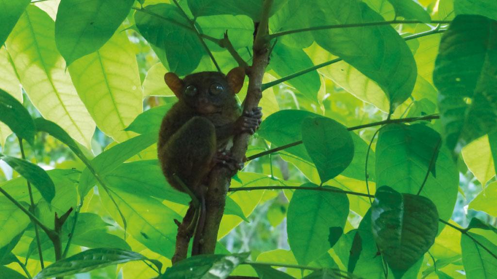 À la découverte de la faune des Philippines