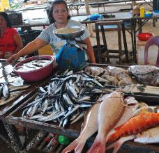 Articles et actualités aux Philippines