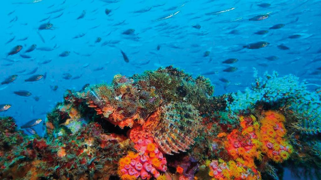 Les Philippines, l'une des meilleures destinations pour le snorkeling
