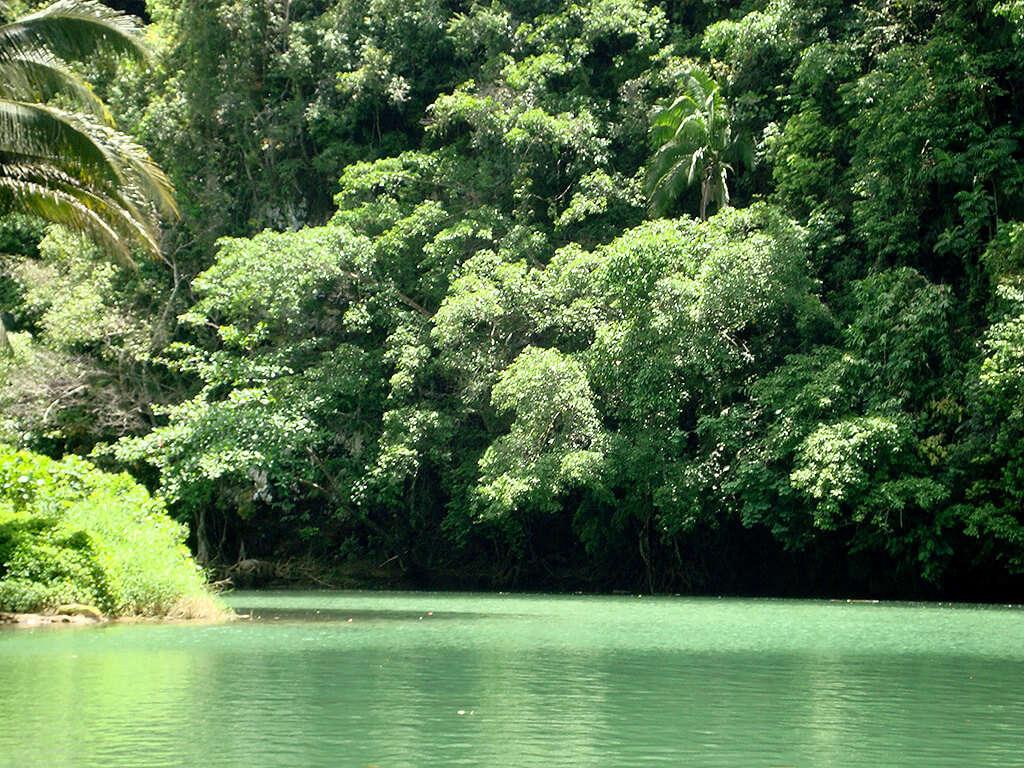 Rivière dans la jungle à Bohol.