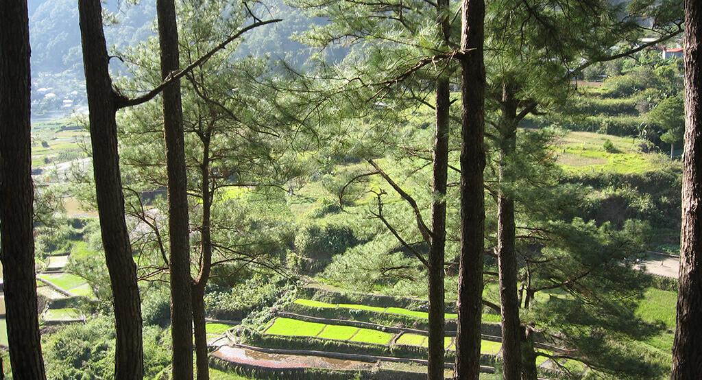 Rizières en terrasse dans la région de Luzon aux Philippines.