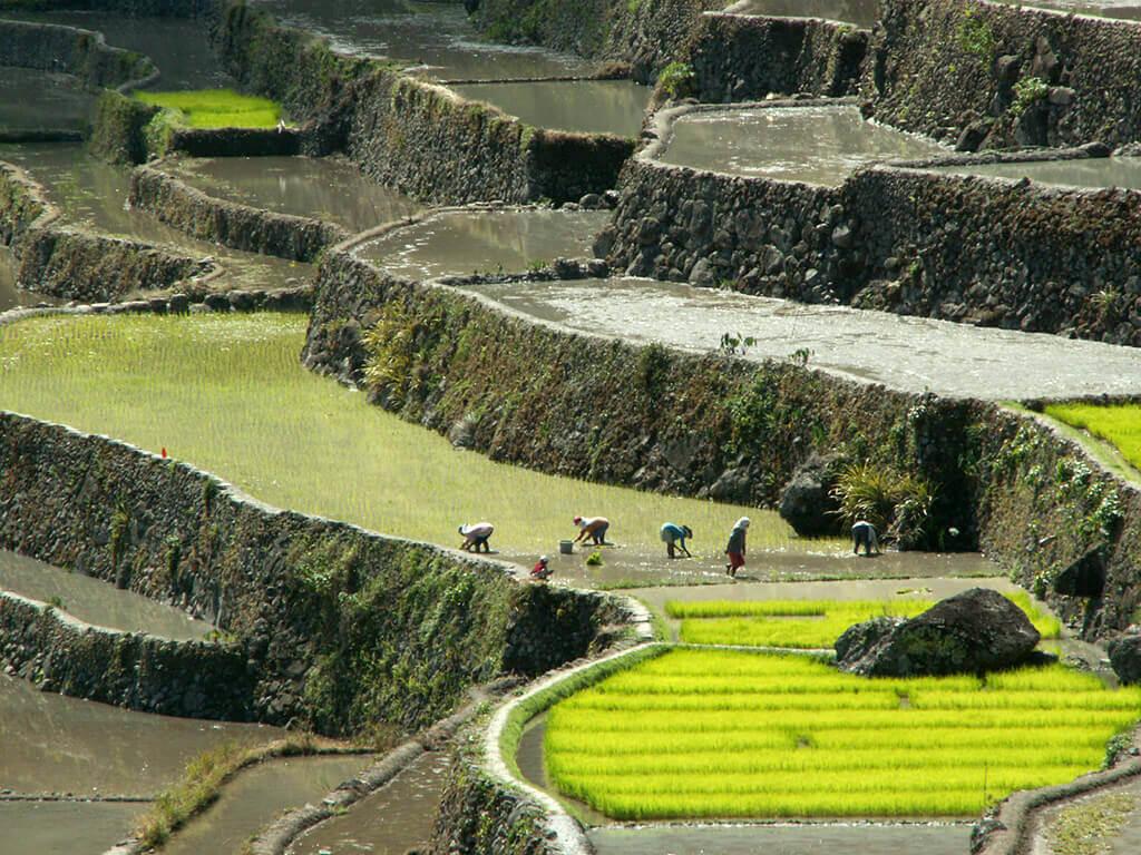 Banaue, écrin des célèbres rizières en terrasses, patrimoine mondial de l'humanité.