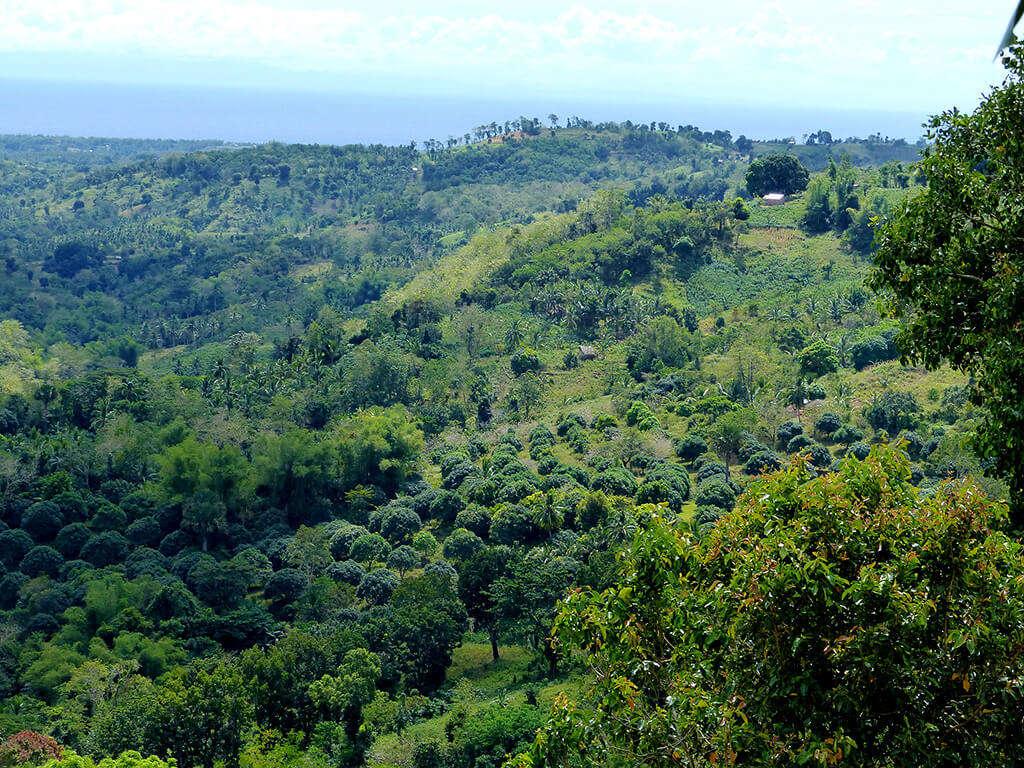 Vue sur les montagnes à Negros et Apo.