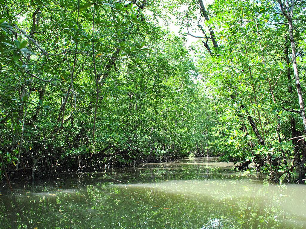 Rivière à Palawan, Philippines.