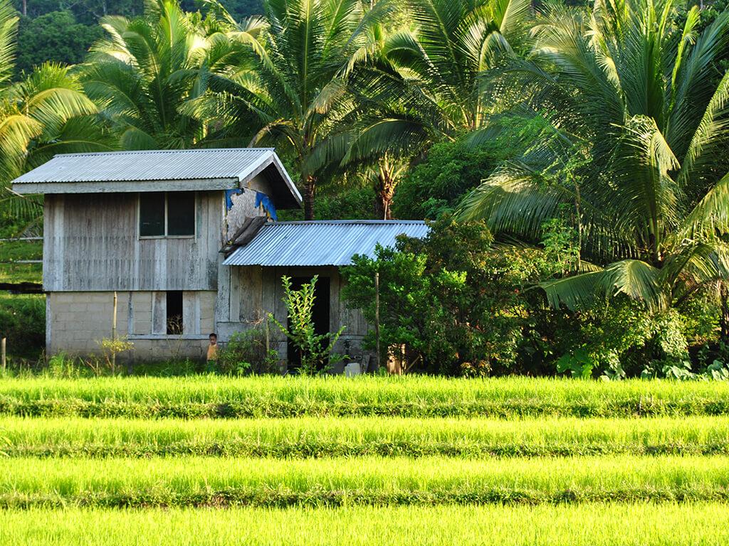Vue sur les rizières à Palawan, Philippines.